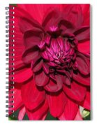 Dahlia Named Nuit D'ete Spiral Notebook