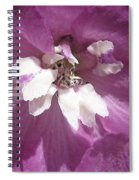 Delphinium Named Magic Fountains Lilac Pink Spiral Notebook