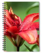 Double Asiatic Lily Named Cocktail Twins Spiral Notebook