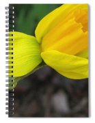 Dwarf Cyclamineus Daffodil Named Jet Fire Spiral Notebook
