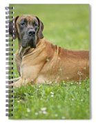 Great Dane Spiral Notebook