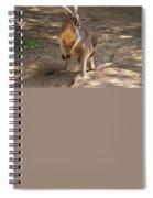 Kangaroos Spiral Notebook