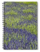Lavendar Field Rows Of White And Purple Flowers Spiral Notebook