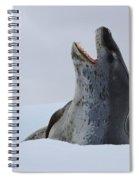 Leopard Seal Spiral Notebook