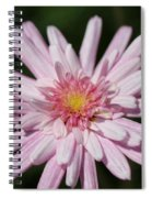 Marguerite Daisy Named Double Pink Spiral Notebook