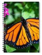 Monarch Danaus Plexippus Spiral Notebook
