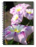 Morning Glory Named Pink Ensign Spiral Notebook