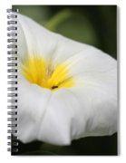 Morning Glory Named White Ensign Spiral Notebook