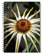 Osteospermum Named African Moon Spiral Notebook