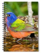 Painted Bunting Spiral Notebook