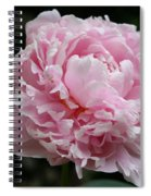 Pink Peony Spiral Notebook