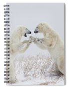 Polar Bears Play Fighting Along The Spiral Notebook