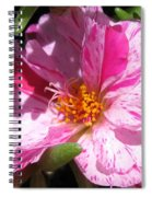 Portulaca Named Sundial Peppermint Spiral Notebook