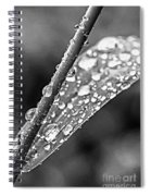 Raindrops On Grass Spiral Notebook