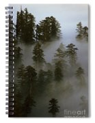 Redwood Creek Overlook With Giant Redwoods Sticking Out Above Lo Spiral Notebook