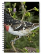 Rose-breasted Grosbeak Spiral Notebook
