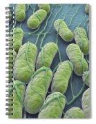 Salmonella Bacteria Spiral Notebook
