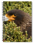 Striated Caracara Spiral Notebook