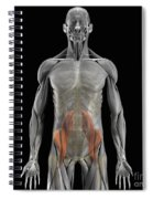The Psoas Muscles Spiral Notebook