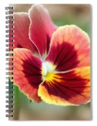 Viola Named Penny Red Blotch Spiral Notebook