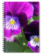 Viola Named Sorbet Plum Velvet Jump-up Spiral Notebook