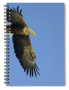 White-tailed Eagle Spiral Notebook