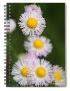 Wildflower Named Robin's Plantain Spiral Notebook