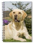 Yellow Labrador Spiral Notebook