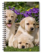 Yellow Labrador Puppies Spiral Notebook