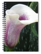 Zantedeschia Named Picasso Spiral Notebook