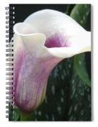 Zantedeschia Named Picasso Spiral Notebook
