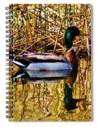5.4.2014 Wild Mallard Spiral Notebook