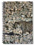 Arabian Leopard Panthera Pardus Spiral Notebook