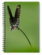 Black Swallowtail Butterfly  Spiral Notebook