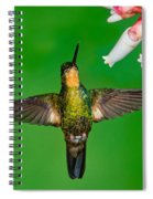 Buff-winged Starfrontlet Spiral Notebook
