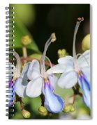 Clerodendrum Ugandense Or Blue Butterfly Bush Spiral Notebook
