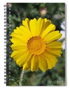 Crown Daisy Flower Spiral Notebook