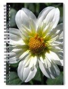 Dahlia Named Alpen Cherub Spiral Notebook