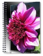 Dahlia Named Blue Bayou Spiral Notebook