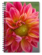 Dahlia Named Brian's Sun Spiral Notebook