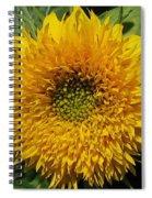 Dwarf Sunflower Named Teddy Bear Spiral Notebook