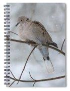 Eurasian Collard Dove Spiral Notebook
