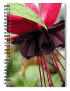 Fuchsia Named Roesse Blacky Spiral Notebook