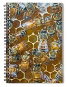 Honey Bees In Hive Spiral Notebook