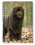 Newfoundland Dog Spiral Notebook