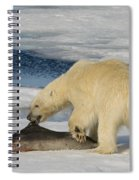 Polar Bear With Fresh Kill Spiral Notebook