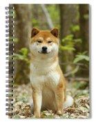 Shiba Inu Dog Spiral Notebook