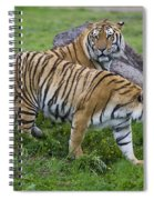 Siberian Tigers, China Spiral Notebook