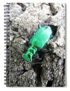 6 Spotted Tiger Beetle Spiral Notebook
