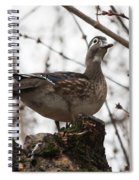 Wood Duck Spiral Notebook